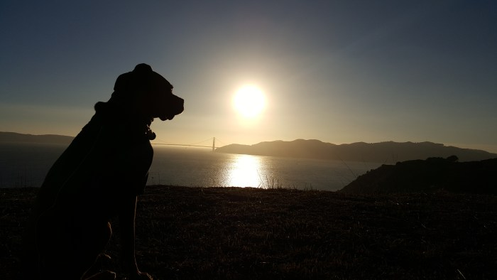 Sunset View with Max