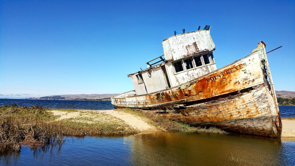 Ultimate Guide to Point Reyes