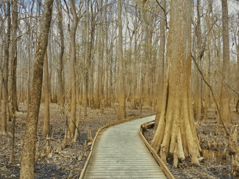 Congaree National Park, Colombia South Carolina