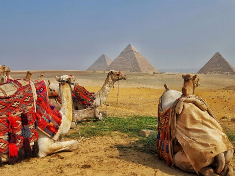 Why Egypt Needs to be in Your 2017 Travel Plans, Pyramids, Aswan, Red Sea, Luxor, Alexandria, Scuba Diving, Mount Sinai, White Desert, National Museum, Mummy, Hot Air Balloon, Nile River, Sheesha, Shisha, Mohamed Ali Mosque, Citadel, Camels, Cairo, Dahab, Dhow