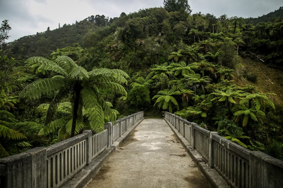 Whanganui Journey Great Walk, The Nine Great Walks of New Zealand, Check out more at www.beardandcurly.com