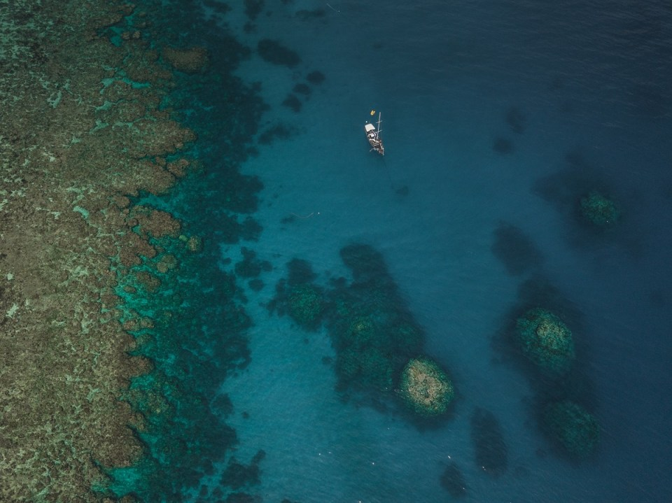 Diving the Great Barrier Reef: Coral Sea Dreaming, Diving the Great Barrier Reef, Milne Reef, Australia, Cairns, Check out more at www.beardandcurly.com