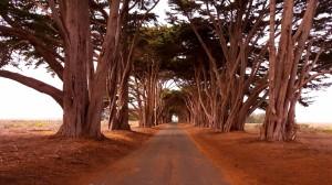 Cyprus Tree Tunnel