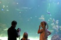 Universeum 2009