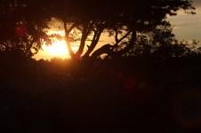 2012_83 - Solnedgång på Tjörn
