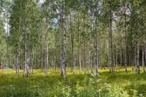 Värmland-5221