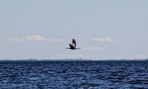 200521-143901-bird-1D8A7361