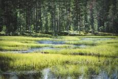 200723-141355-skog-1D8A7809