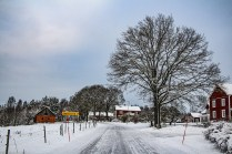 210114-120822-winter-road-IMG_5959