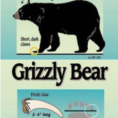 Black Bear Diagram 8 To 3 Encoder Logic Grizzly Vs Know The Difference Bearsmart Com Between And