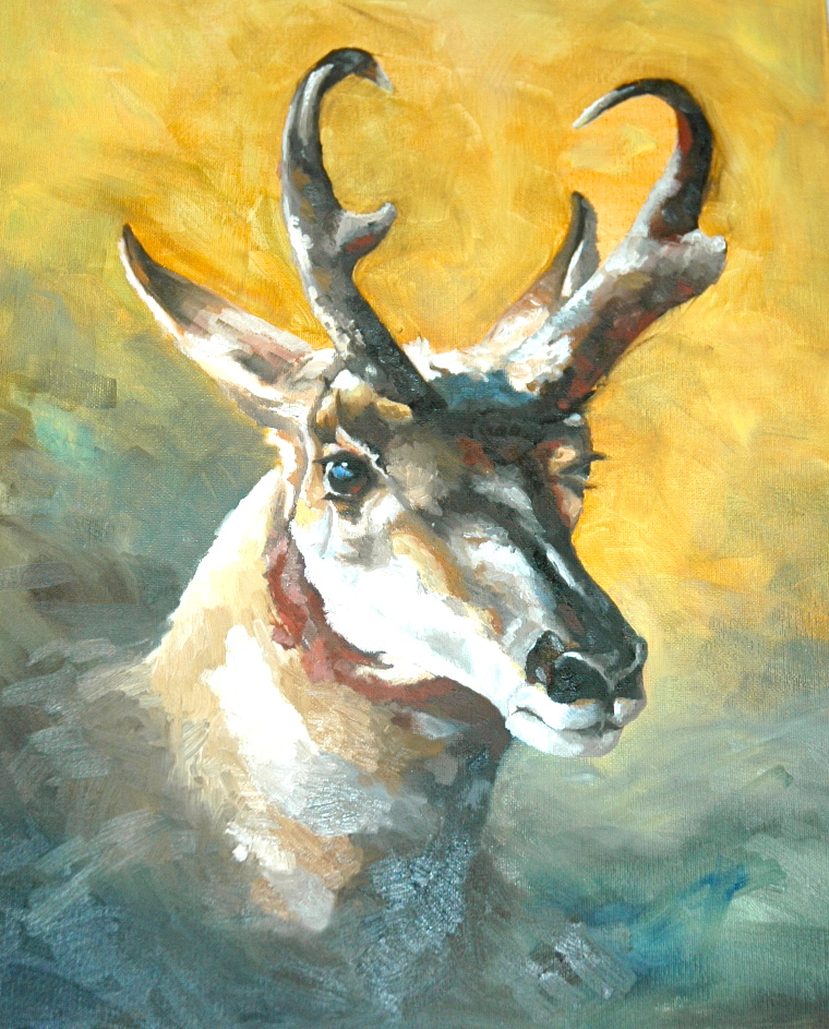 Antelope Study by Colt Idol