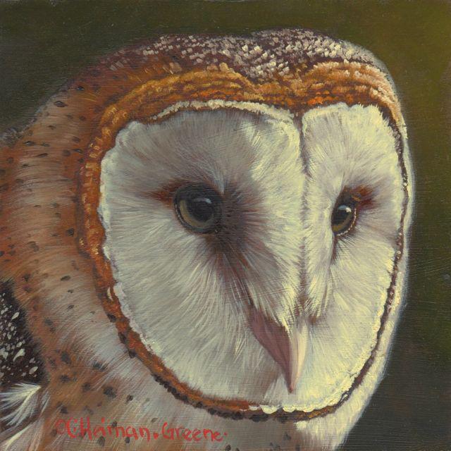 Barn Owl by Carol Heiman-Green