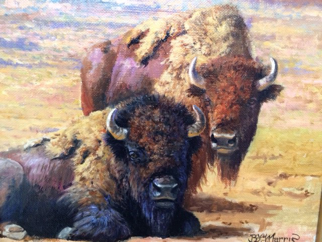 "Yellowstone Bison by Bonnie Marris - 8"" x 10"" Oil on canvas - Framed"
