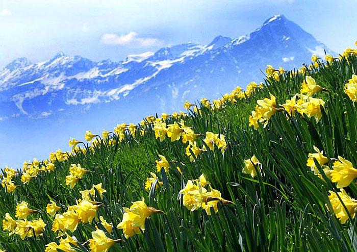 Bilder Beatenberg Berner Oberland Schweiz  Bergfrhling