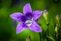 bluebells-1429817_640.jpg