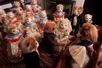 cats-wedding_1737761i.jpg