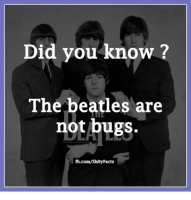 did-you-know-the-beatles-are-not-bugs-fb-com-shity-facts-4878323-1.png