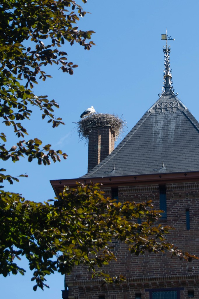 This stork had taken up roost on the top of the castle and more were flying about