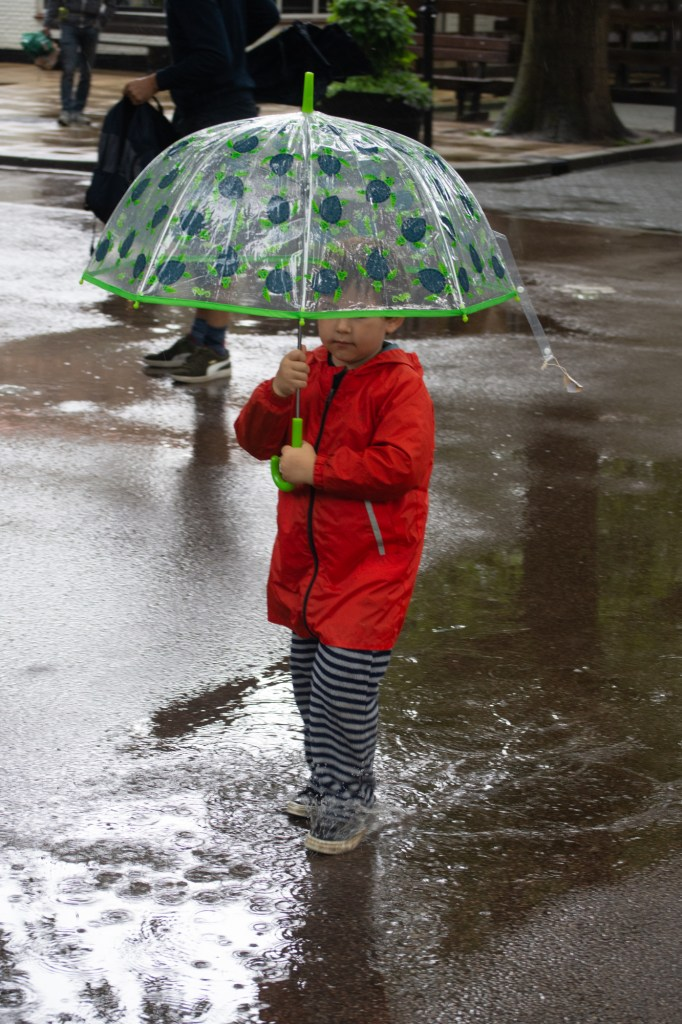 Boy playing in the puddles at DierenPark Amersfoort by Beatrice Murch