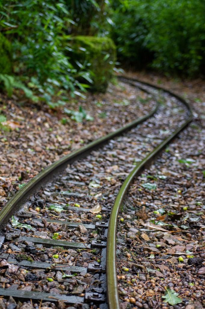 Train tracks at DierenPark Amersfoort by Beatrice Murch
