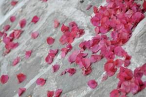 © Beatrice Otto bougainvillea petals on stone