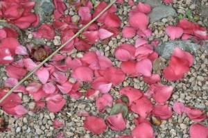 rose petals on gravel
