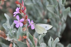 wild flower and butterfly