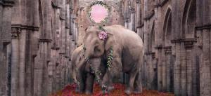 Elephants in the Abbey of San Galgano, Italy