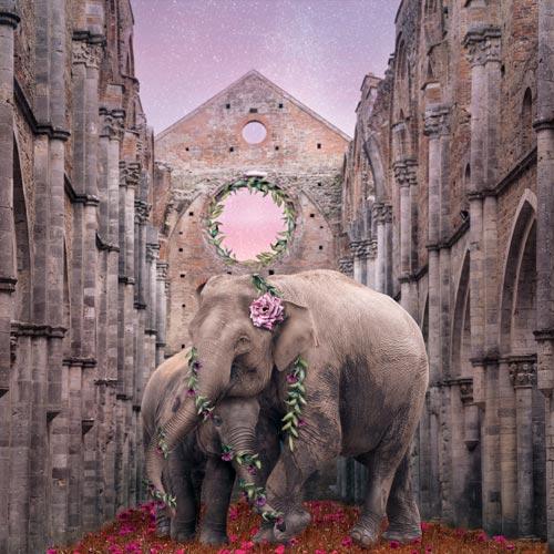 Elephants in an Abbey in Tuscany