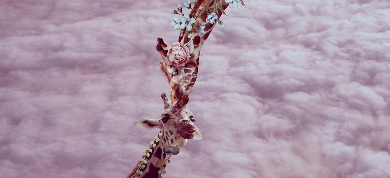Giraffe mom giving a kiss to son