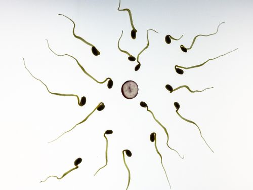 healthy sperms