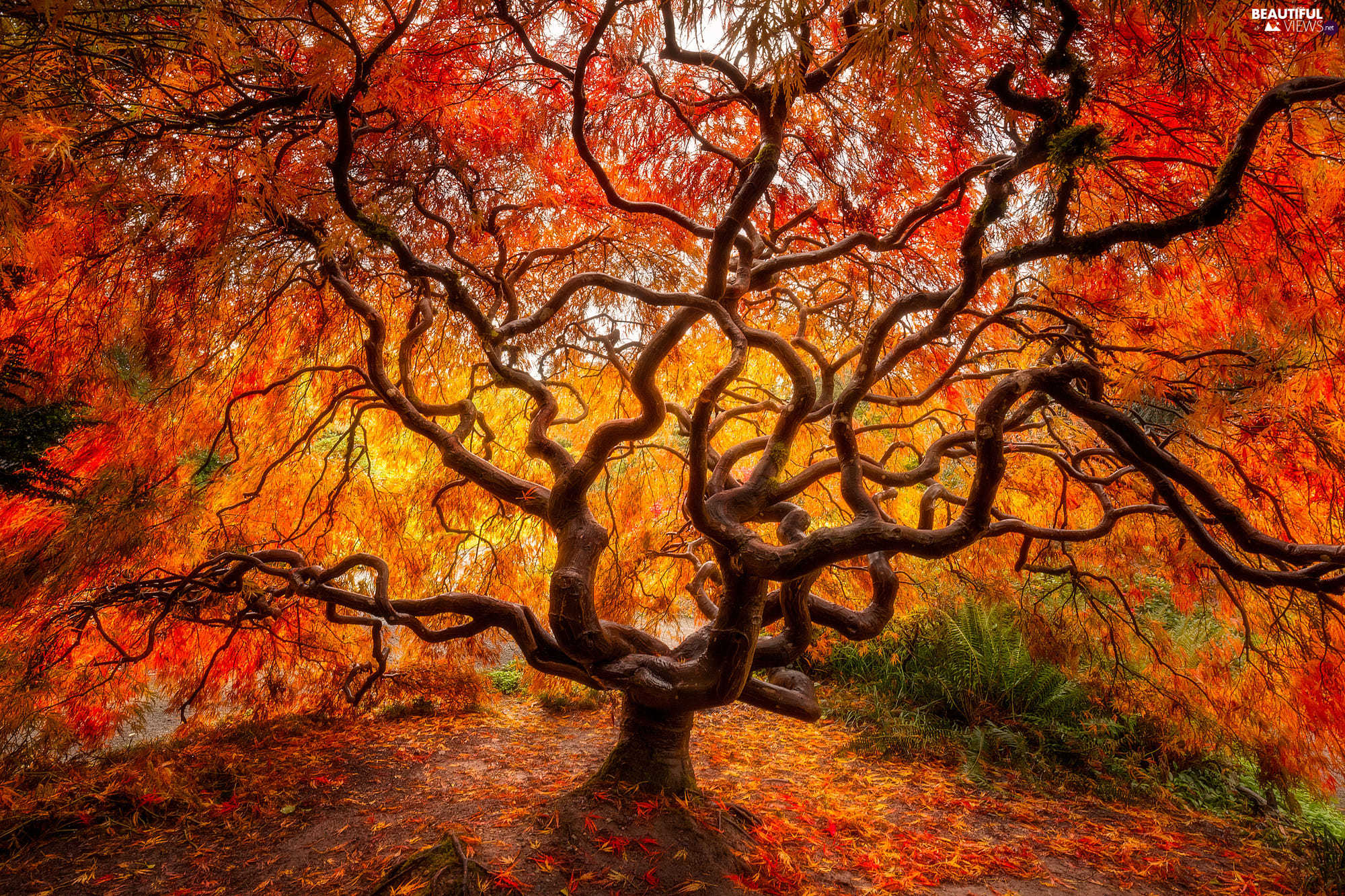 Fall Mountaons In The Sun Wallpaper Autumn Japanese Maple Leaf Trees Beautiful Views