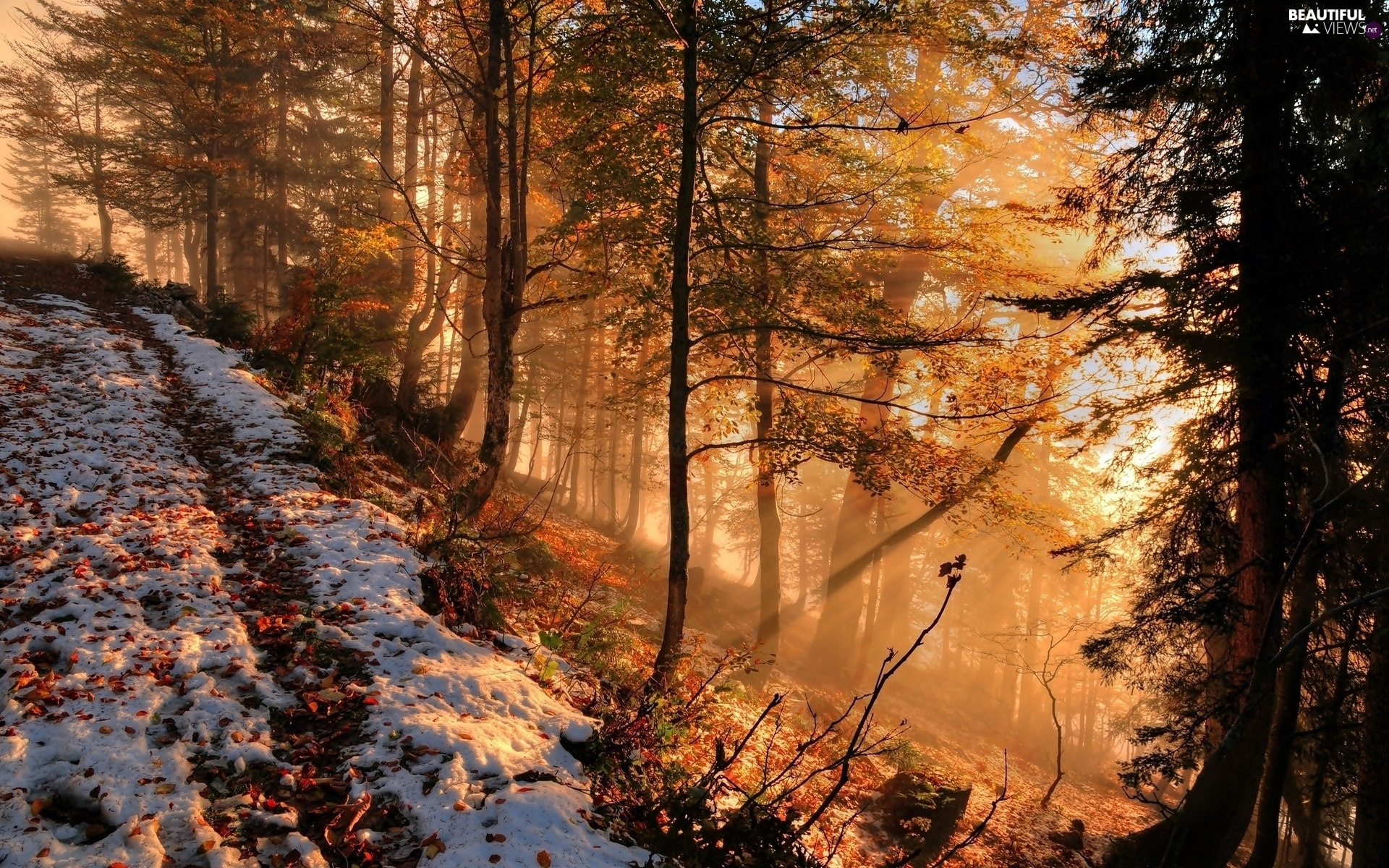 Panoramic Wallpaper Fall Sprinkle Snow Forest Fog Autumn Beautiful Views