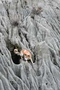 The dog stops on a ledge looking down
