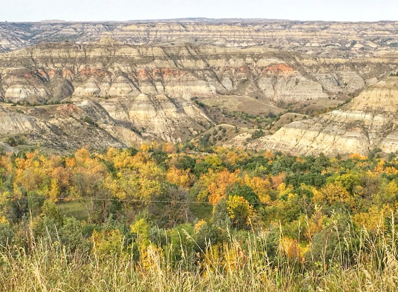 Autum leaves are beginning to show their colors in mid-September at the Little Missouri State Park.