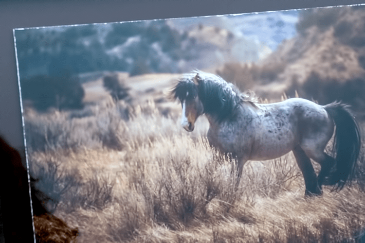 How Blaze, a wild horse in the Theodore Roosevelt National Park has become a mascot for wild horses Part 1