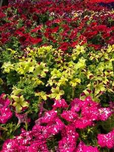 flowers, greenhouse, Glendive, Bloom, coffee, coffeeshop, BeautifulBadlandsND