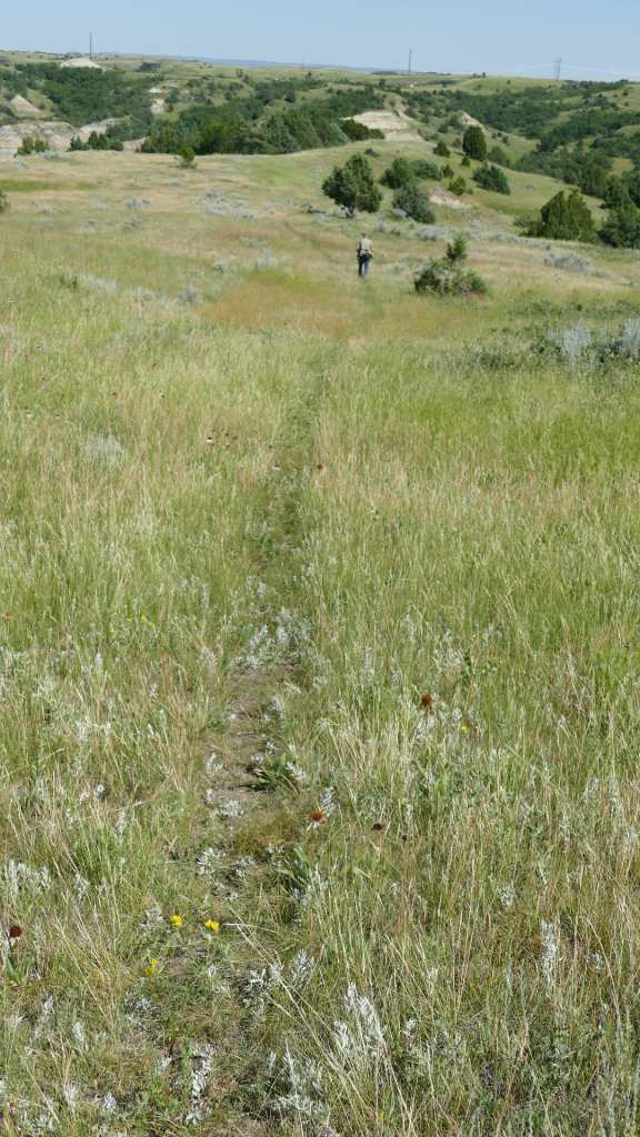 Hiking Lush Green Grasslands near Summit Campground