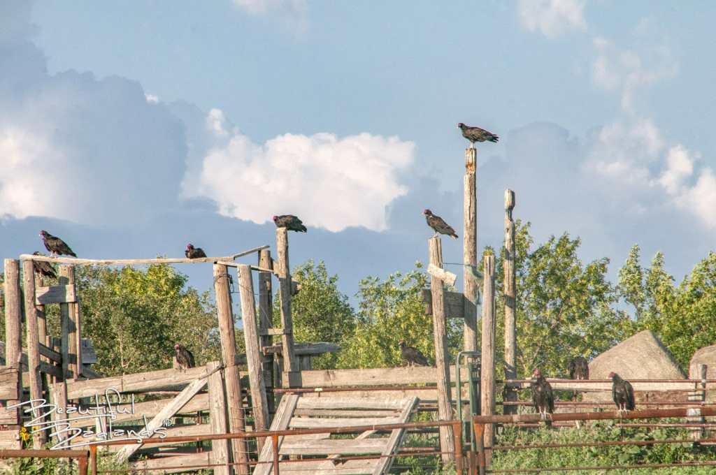 charging eagle bay badlands