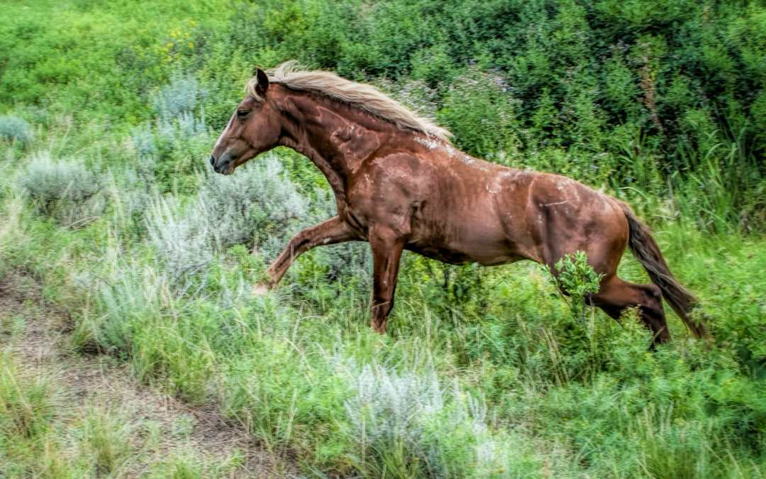 Saturday Snapshot Friendly Wild Horses