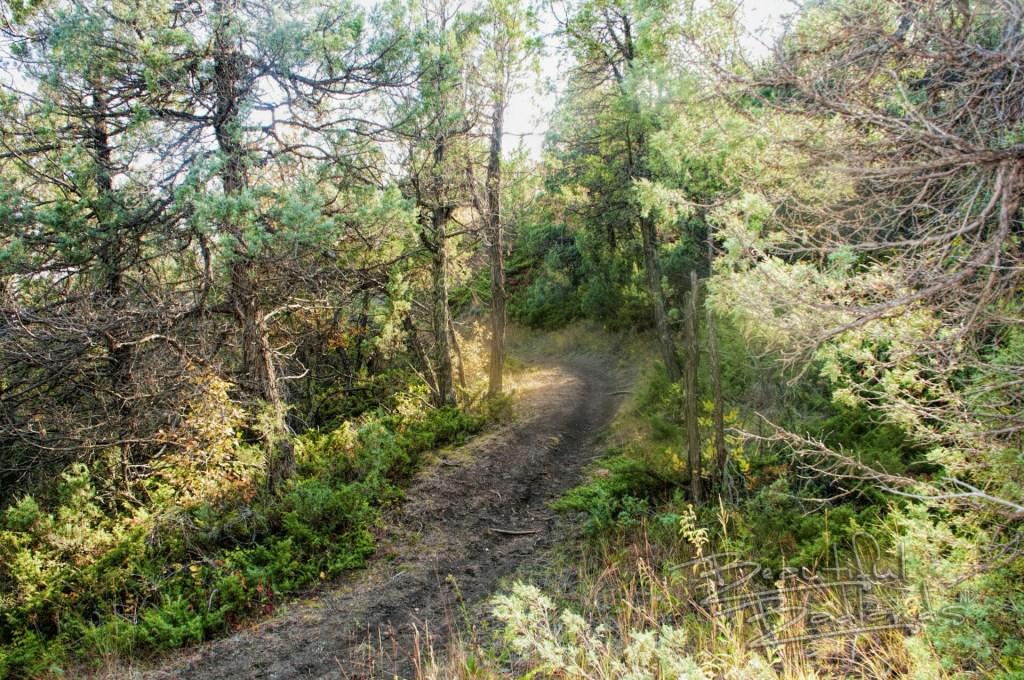 Devil's Pass trail trees