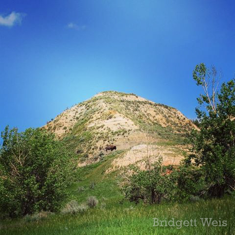 A Scene from Theodore Roosevelt National Park, by Bridgett Weis. June 2019