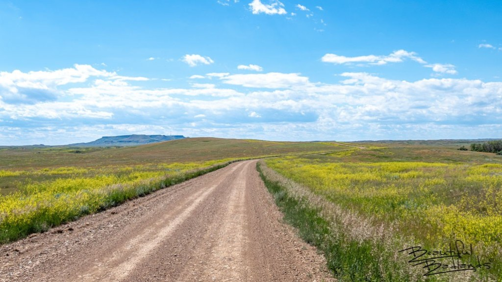 Western North Dakota becomes a brilliant kaleidoscope of color in early summer when the grass is still bright green, and the blooming wild yellow clover blooms.In the distance is Sentinel Butte.
