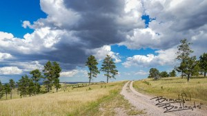 Dark Clouds Dirt Road right frame curves to west, row of pines across frame heading to Capitol Rock, Camp Crook, SD July 14, 2020