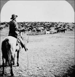 Roundup on the Sherman Ranch, Genesee, Kans. Cowboy with lasso readied looks beyond the herd on the open range to his fellow cowpunchers waiting on the horizon, ca. 1902