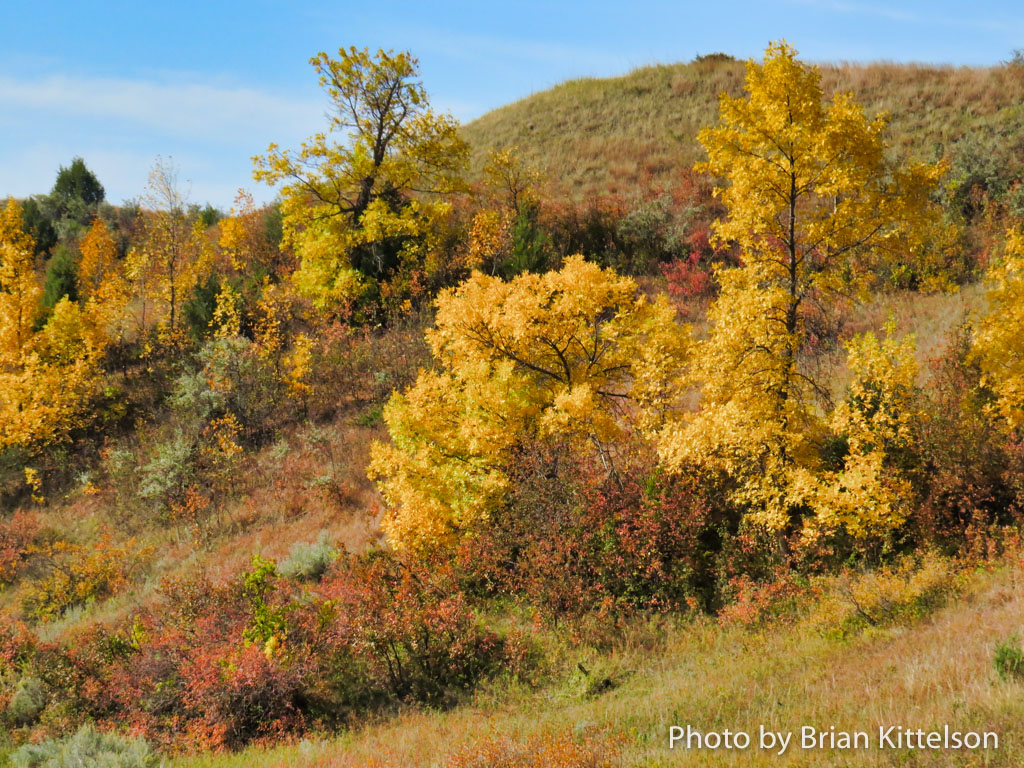 Brilliant Yellows and Oranges and Red in the North Dakota Badlands on a clear fall morning.