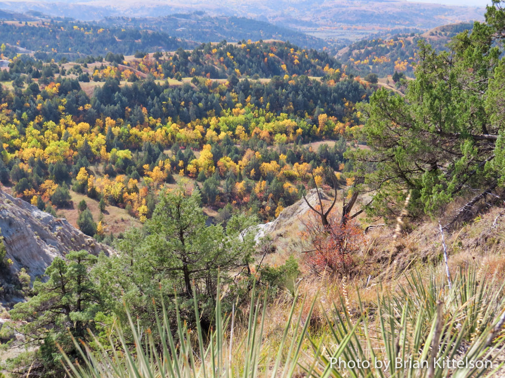 Yellows, Oranges, and Greens of Fall in the North Dakota Badlands.