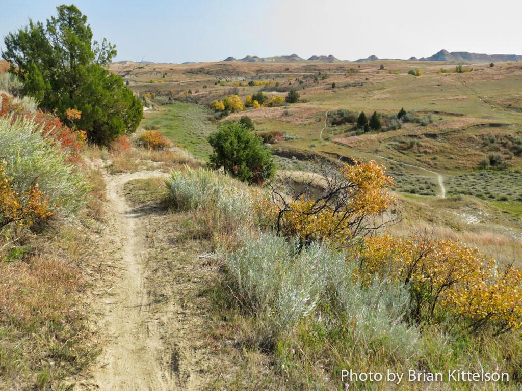 The Maah Daah Hey Trail in Western North Dakota meanders through rolling grasslands, often open range for cattle.