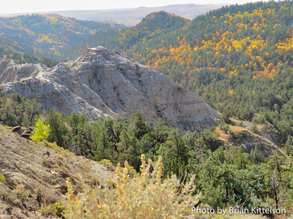 Fall foliage is prevalent especially on north facing slopes and contrasts with the stark formations of the Badlands of North Dakota.