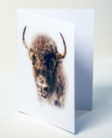 Bison Up Close, Sepia Portrait Notecard 5 x 7 inches